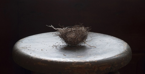 Wagner Nest on Chair; Laurie Beck Peterson