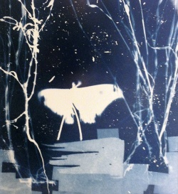cyanotype, moth, forest