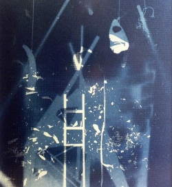 cyanotype, photogram