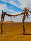 photographs, Morocco, sahara, single-sheet books, works on paper