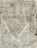 Pale Grass Net #2 by Bill Brookover